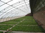 日光温室 温室大棚 双梁温室