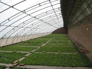 一面坡蔬菜温室大棚