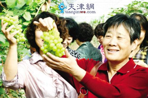 北辰创造现代化农业 都市型农民