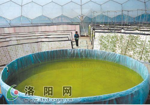温室内的水池,用来调节温度和湿度。