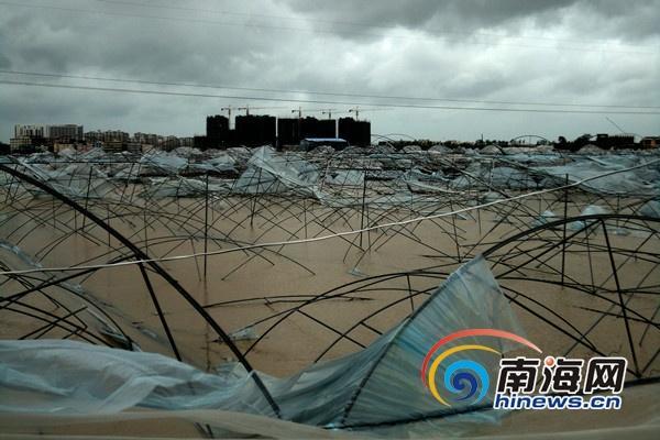 三亚凤凰镇一果蔬基地500亩大棚被毁