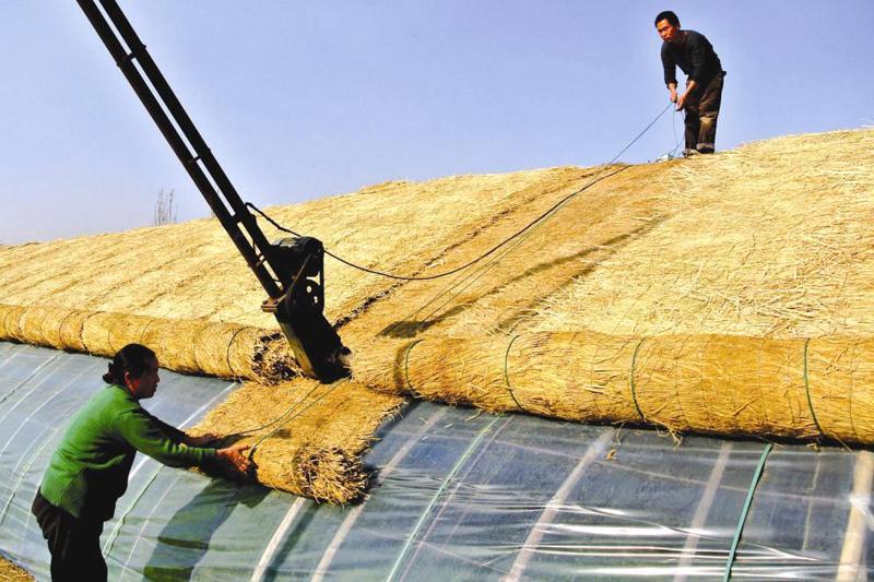 乌鲁木齐市米东区柏杨河哈萨克族乡柏杨河村村民郝建军一家在为大棚加盖防寒帘