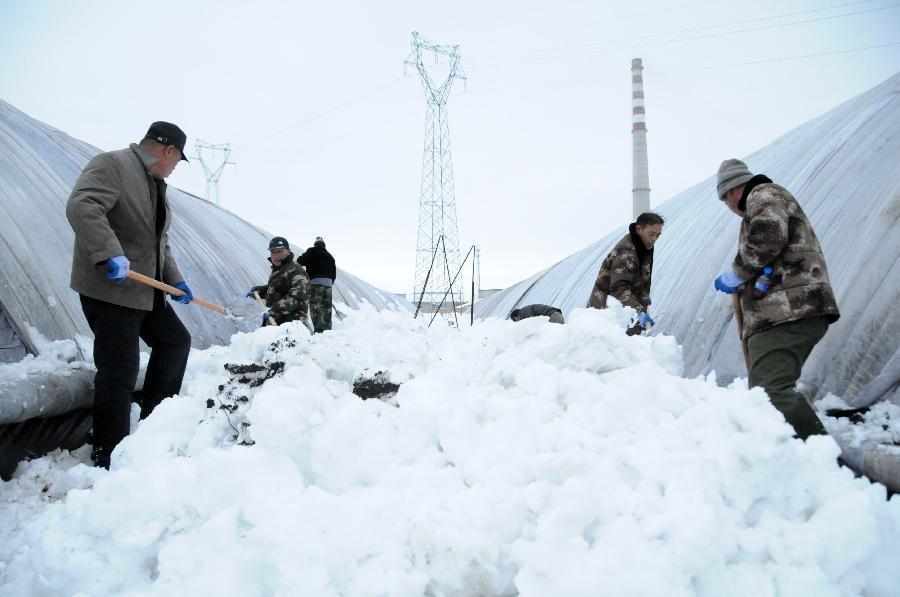 11月15日,工人在鹤岗市兴安区红旗镇新农村创业园设施蔬菜合作社里清理积雪