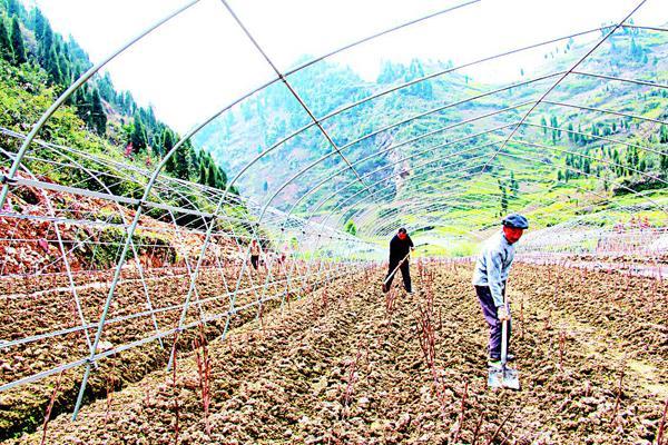 图为工作人员正在管护苗圃
