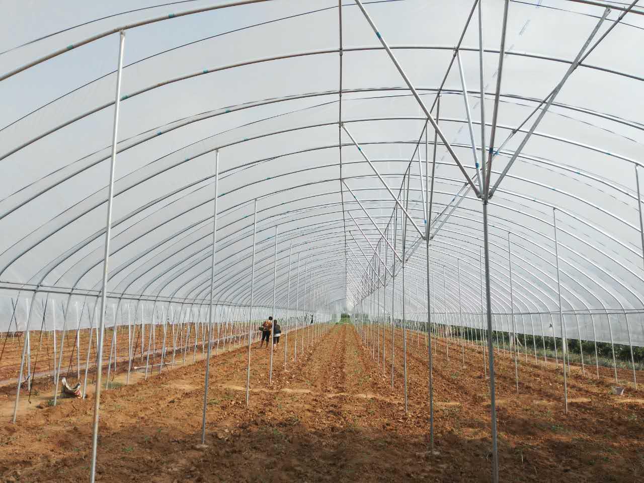 天津绿洲温室大棚厂
