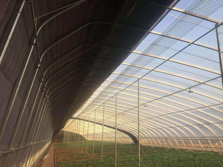 钢架大棚、钢管大棚-富农温室大棚厂家